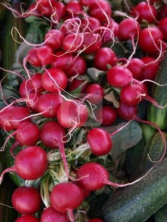Radish  stock photo, Fresh red radish by Lars Kastilan