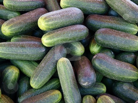 Cucumbers stock photo, Lots of cucumbers by Lars Kastilan