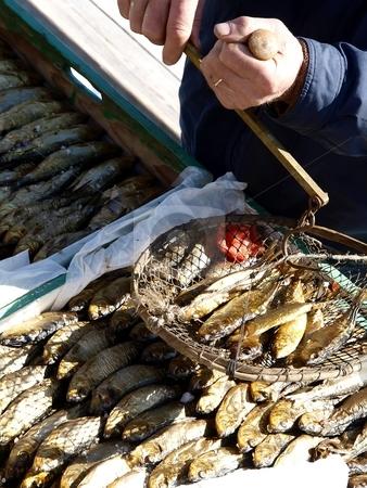 Fresh Fish  stock photo, Fresh fich at the market by Lars Kastilan