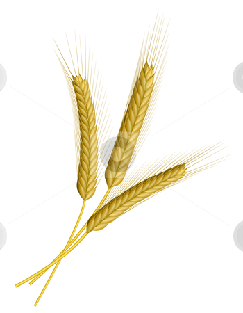 Wheat isolated on white stock vector clipart, Three ears of wheat isolated on white by Laurent Renault