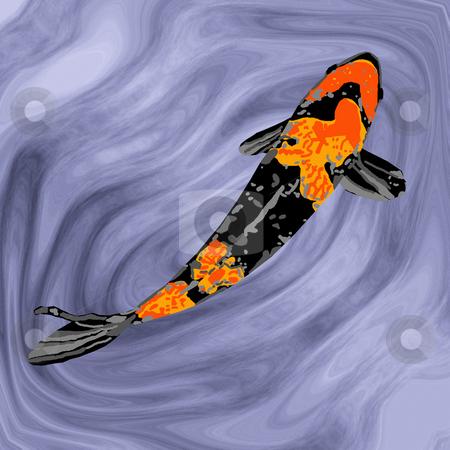 Black-and-Orange Koi stock photo, A black-and-orange koi swimming gracefully in a fish pond. by Karen Carter