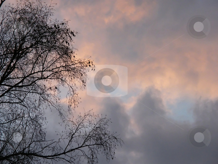 Beautiful March Sky at Dusk  stock photo, Cloudy Pink and Blue Sky with some branches of a large bare tree showing off to the left side. A Beautiful March Sky at Dusk in Northwest Ohio. by Dazz Lee Photography