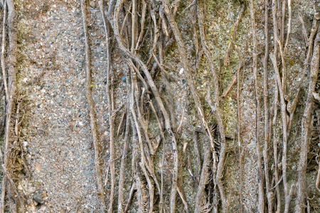 Background stock photo, Close-up photo of concrete wall with dead vines on it by Dennis Crumrin