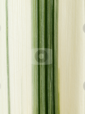 Leaf detail stock photo, Striped white and green leaf macro by Laurent Dambies