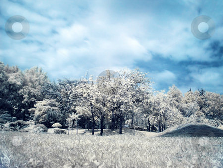 Japanese garden stock photo, Infrared panoramic  landscape of a japanese garden by Laurent Dambies