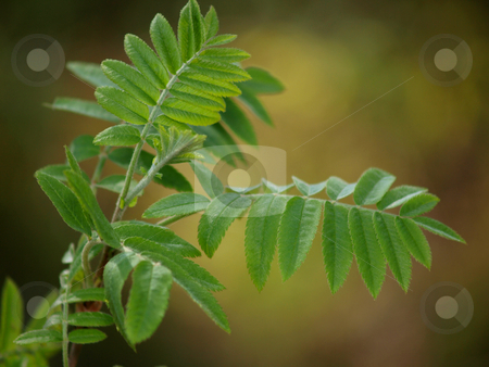 Leafs stock photo, Green fresh leaves on a little tree by Arve Bettum