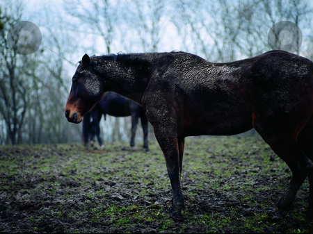 Rain stock photo, Horses in the rain by Andreas Brenner