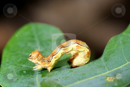 caterpillar stock photo, Small yellow caterpillar sitting on green leaf by Jolanta Dabrowska
