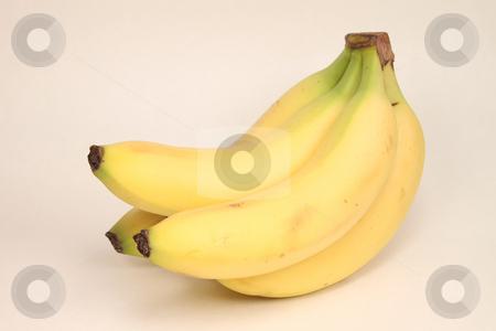 Organic Bananas stock photo,  by Richard Walker