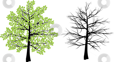 Spring and winter tree stock vector clipart, Tree illustration depicting spring and winter by Kirsty Pargeter