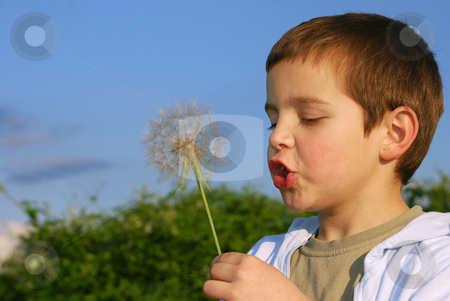 Childs wish stock photo, A small boy with big dreams, lit with afternoon sun holding big dandelion-like plant in hand and blowing. by Ivan Paunovic