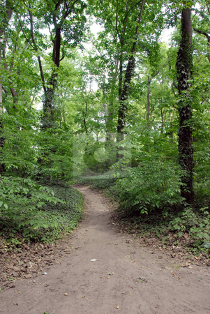 Forest path stock photo, Walking path in green forest between trees by Julija Sapic