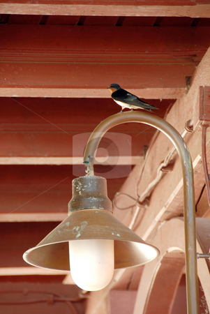 Swallow on torch stock photo, Swallow on torch under wooden roof ceiling by Julija Sapic