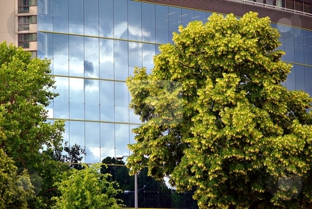 City landscape stock photo, Sky on glass facade and tree with yellow flowers by Juraj Kovacik