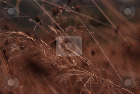 Nature stock photo, Close-up with plants by Dragos Iliescu