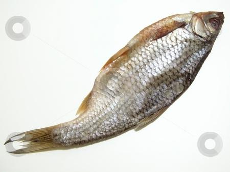 One dry fish stock photo, Single dry fish over the white background by Sergej Razvodovskij