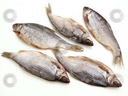 Dry fish stock photo, Five dry fishes on the white background by Sergej Razvodovskij