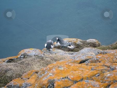Near the nest stock photo, Two birds near yhe nest with eggs by Sergej Razvodovskij