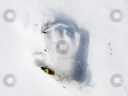 Hand print stock photo, Child hand print at the white snow by Sergej Razvodovskij