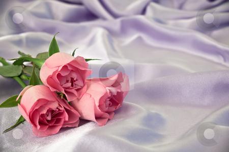 Three rosebuds stock photo, Three pink rosebuds on lilac satin. by Norma Cornes