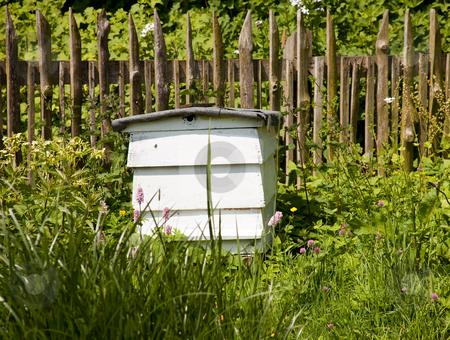 Beehive stock photo, A beehive in natural surrounding by Norma Cornes