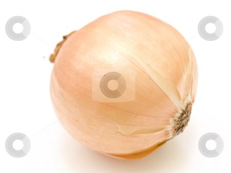 Onion stock photo, The single onion against the white background by Sergej Razvodovskij