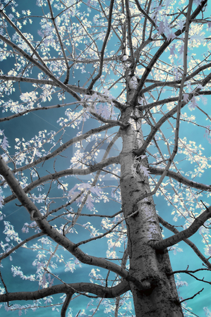 Infrared Tree stock photo, Tree close up shot with an infrared filter by Vlad Podkhlebnik