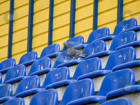 Dove at the stadium stock photo, Single grey dove at the empty seats of the stadium by Sergej Razvodovskij