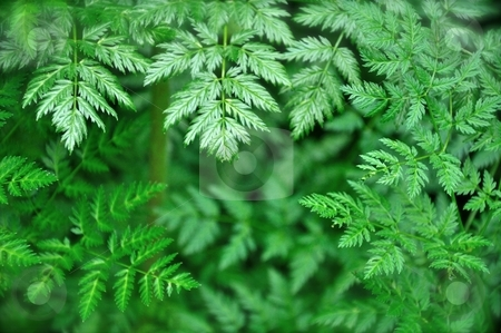 Green Leaves Background stock photo, Lush green leaves form a nice background image with plenty of copy space. by Ben O'Neal