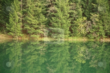 Lake in the forest stock photo, Lake in the forest by Gregory Dean
