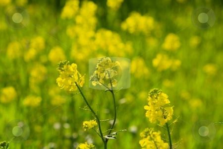 Wildflowers in field stock photo, Wildflowers in field by Gregory Dean