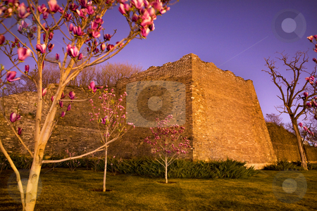 City Wall Park with Pink Magnolias Beijing China  stock photo, Night Shot City Wall Park Beijing, China with pink magnolias  This is the city wall park with the original wall that surrounded the old city of Beijing. by William Perry