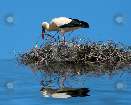 Stork stock photo, A mother stork bird on a chimeny by Marc Torrell