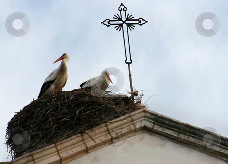 Stork stock photo, Storks couple close to a church bell by Marc Torrell