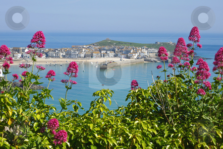 St. Ives wild red Valerian (Centranthus ruber), Cornwall UK. stock photo, St. Ives wild red Valerian (Centranthus ruber), Cornwall UK. by Stephen Rees