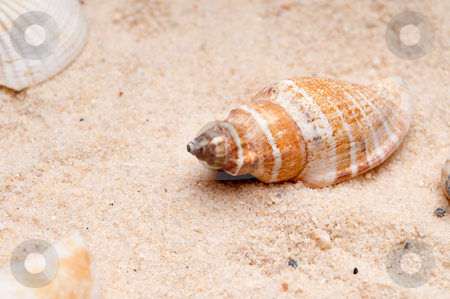 Horizontal close-up of a seashell on sand stock photo, Horizontal close-up of a seashell on sand by Vince Clements