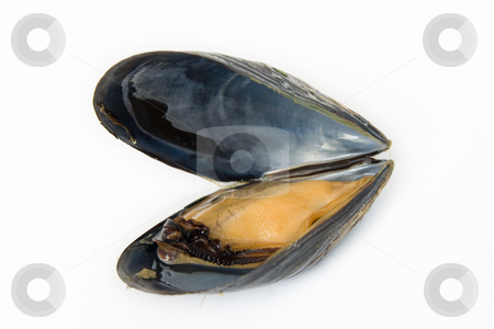 Mussel boiled stock photo, Close up of fresh boiled mussel isolated on white background by ANTONIO SCARPI