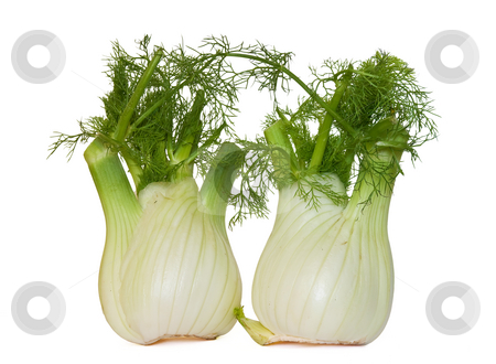 Two fennel stock photo, Two fresh fennel isolated on white background by ANTONIO SCARPI