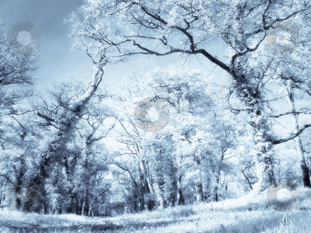 Infrared forest stock photo, Infrared picture of a beautiful forest selenium tone and orton filters applied by Laurent Dambies