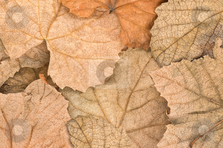 Autumn leaves background. stock photo, Autumn leaves covering the ground, close up. by Pablo Caridad