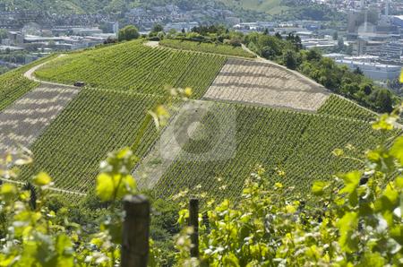 Vineyard stock photo, Vineyard complete view in stuttgart germany by Andreas Brenner