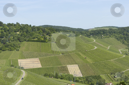 Vineyard stock photo, Huge vineyard by Andreas Brenner
