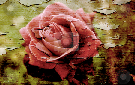 Grunge rose stock photo, Old photo of a rose on a peeling grunge textured background by Kirsty Pargeter