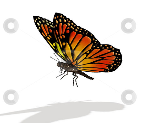 Butterfly stock photo, Colourful butterfly by Kirsty Pargeter
