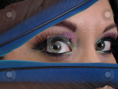 These Eyes stock photo, A green pair of woman's eyes peek out between blue feathers. by Robert Gebbie