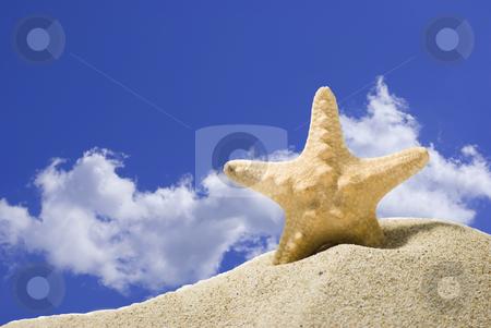 Star fish stock photo, Star fish and sand on blue sky background by Desislava Dimitrova