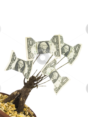 Money Tree stock photo, One Dollar Money Tree on a white background by John Teeter