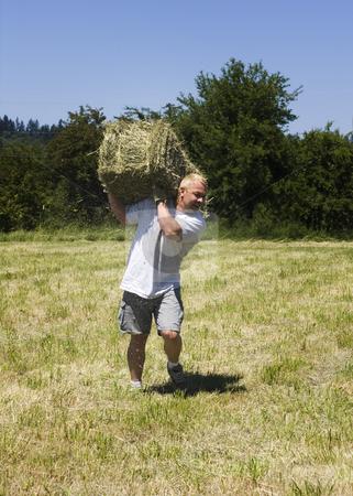 Man lifting hay bale stock photo, Man lifting a hay bale in field by John Teeter
