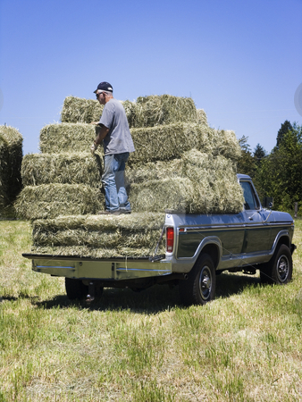 Man loading hay on truck stock photo, Man loading hay onto a truck stacked by John Teeter