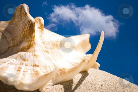 Shell stock photo, Sea shell in sand and blue sky by Desislava Dimitrova